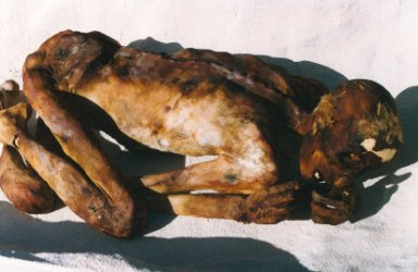 Ginger Mummy Picture